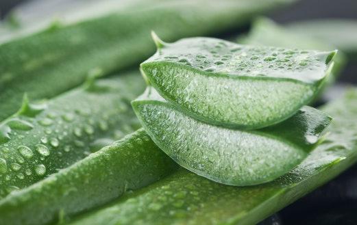 Benefits of Using Aloe Vera Gel