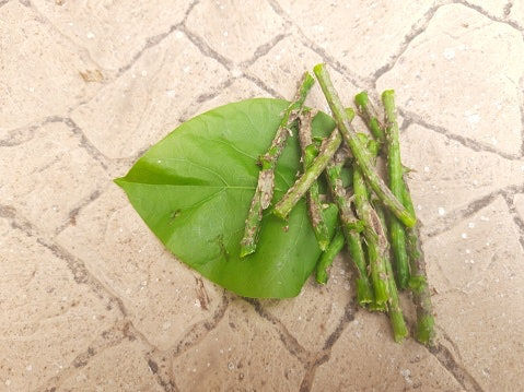 Health Benefits of Consuming Giloy