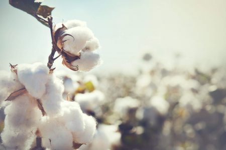 Breathable Cotton for Hot and Humid Regions
