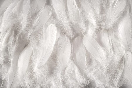 Those Who Like Fluffy Pillows, Look for Feathers and Down Filling