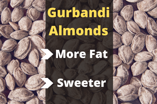 If You Are Looking For More Nutritional Value, Go For Gurbandi or Kashmiri as They Are Less/Not Processed