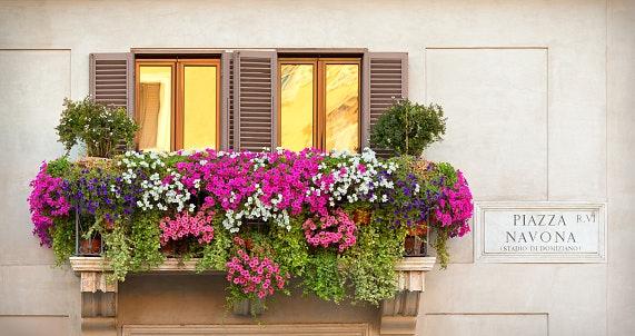 Choose Between Seasonal and Annual Flowers