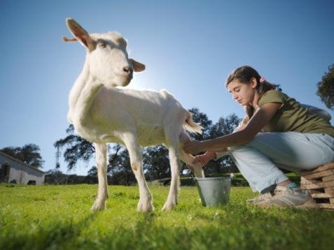 Those Who Are Lactose Intolerant Can Go WIth Non-Bovine Milk Powders
