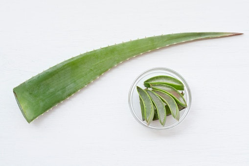 Oily and Acne-Prone Skin Can Benefit From Tea Tree Oil and Aloe Vera