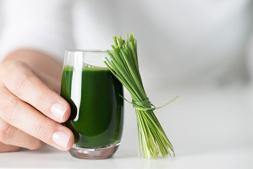 People Who Are Health-Conscious, Wheatgrass Can Be an Option as It Eliminates Toxins and Lowers Blood Pressure