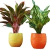 10 Best Pots for Plants in India 2021 (Ecofynd, Ugaoo, and more)