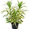 Top 10 Best Indoor Plants in India 2020 (Ugaoo, Plantsveda, and More)