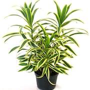 10 Best Indoor Plants in India 2021(Ugaoo, Plantsveda, and More)